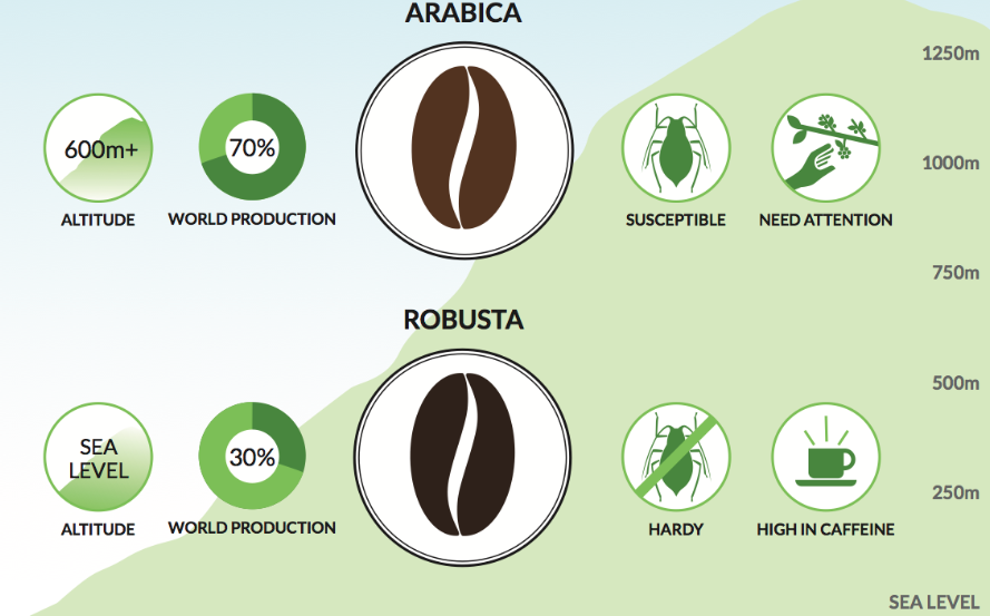 Arabica or Robusta?